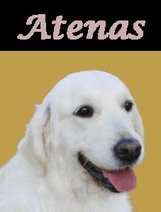 Cara Atenas letras
