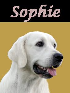 Cara Sophie letras