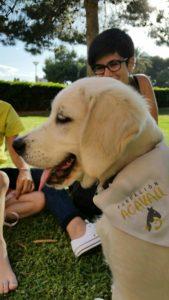 Patri con Habana, cachorro golden retriever. Criador Oro del Olimpo. Habana trabajará como perro de asistencia en teràpia con Acavall