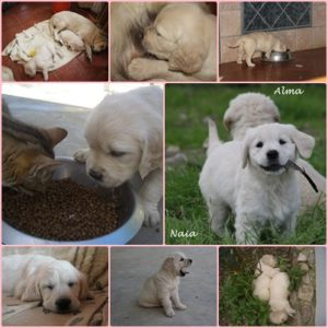 cachorrosorodelolimpo12