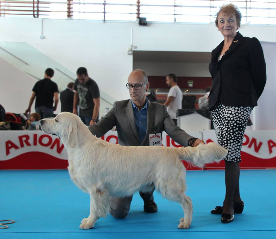 campeon de españa golden retriever